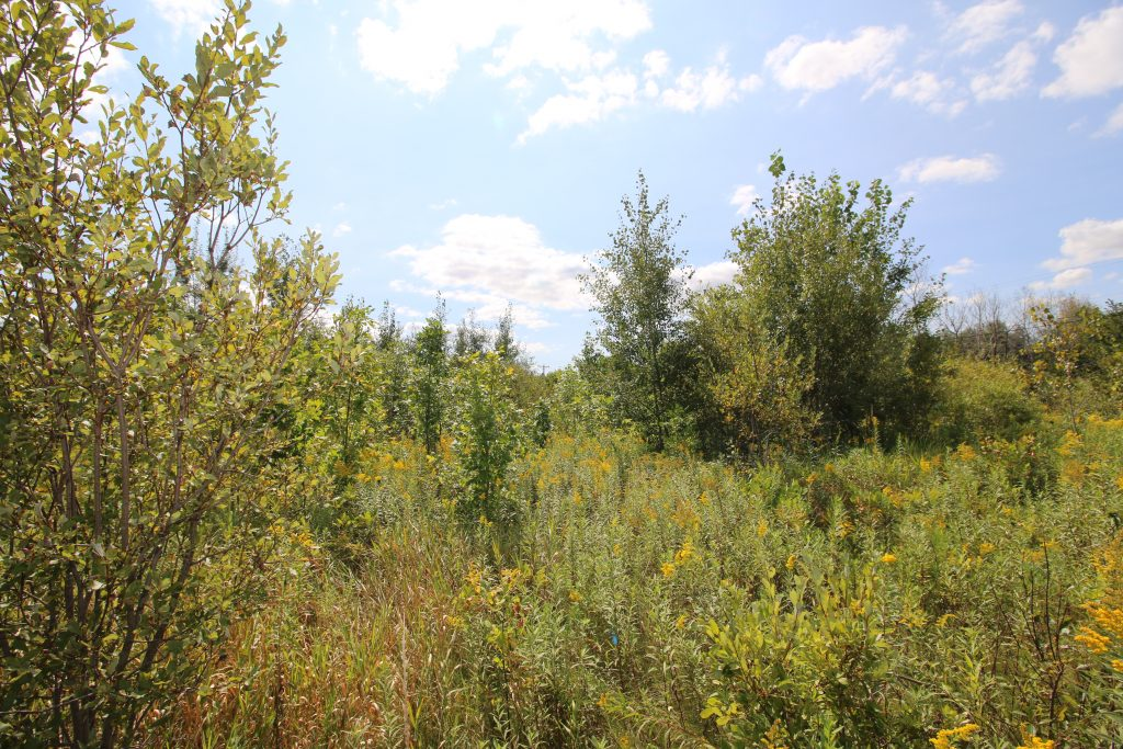 land for sale in hennipen county
